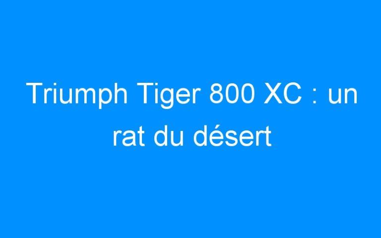 Triumph Tiger 800 XC : un rat du désert